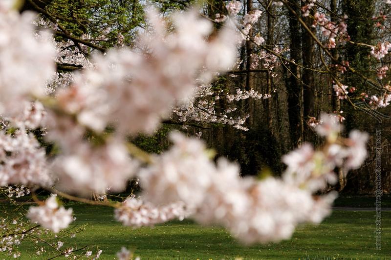 C'est le printemps - Spring time